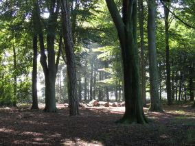 bomen tegenlicht 1 s