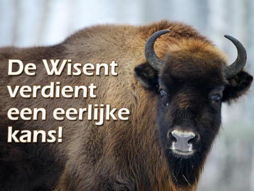 wisent